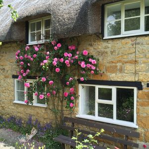 Photo for Stunning vintage-styled 400 year-old thatched cottage featured in Magazines