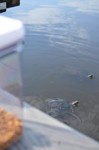 official greeters . . .the turtles