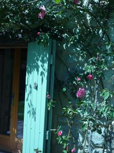Photo for house with terrace flowers, sun and quiet PERIGORD pourpre and noir