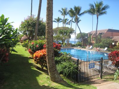 Enjoy the beautiful tropical plants that surround the pool.