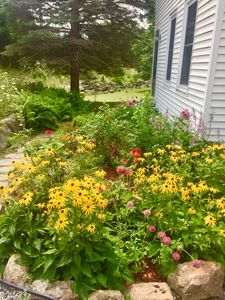 Photo for FARMHOUSE RETREAT in the ❤️ Of Acadia National park/wild blueberries on 3 acres!
