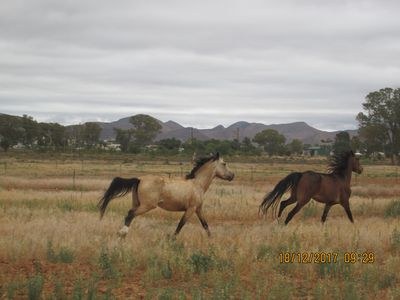 Photo for Draaiberg Karoo Farm House