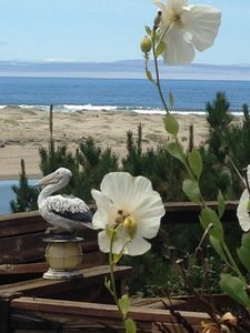 Sit on the deck and list to the ocean, watch the birds or just relax