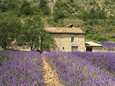 Photo for A Mas of character in the middle of lavender