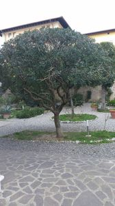 Photo for 3BR House Vacation Rental in Marina di pisa