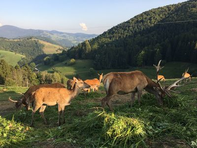 Photo for Holidays in the Black Forest on the Belchen