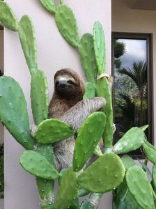 sloth visit  at front entrance of home