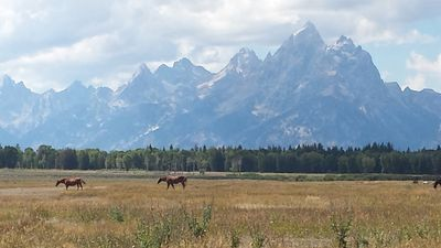 Photo for 'Cabin in the Woods' near Grand Teton & Yellowstone Natl. Parks!
