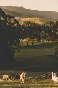 Photo for Sunset - Raw Vegan Health Retreat, farm stay and animal sanctuary