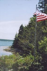 View SE along shore frontage showing bald eagle on treetop