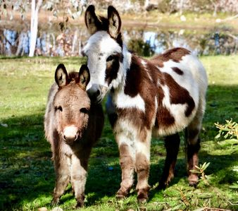 Donkey Tales Farm Cottages - Duffys Cottage