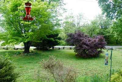 View out front, maples, birds love to visit, split rail fence at entrance