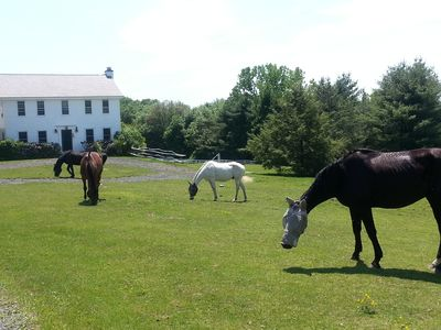 Three wonderful horses to interact with, feed and ride.