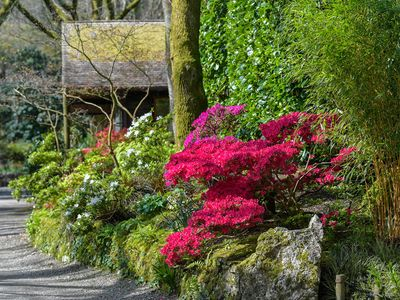 Photo for Moongate 6 - Pinetum Garden Cottages