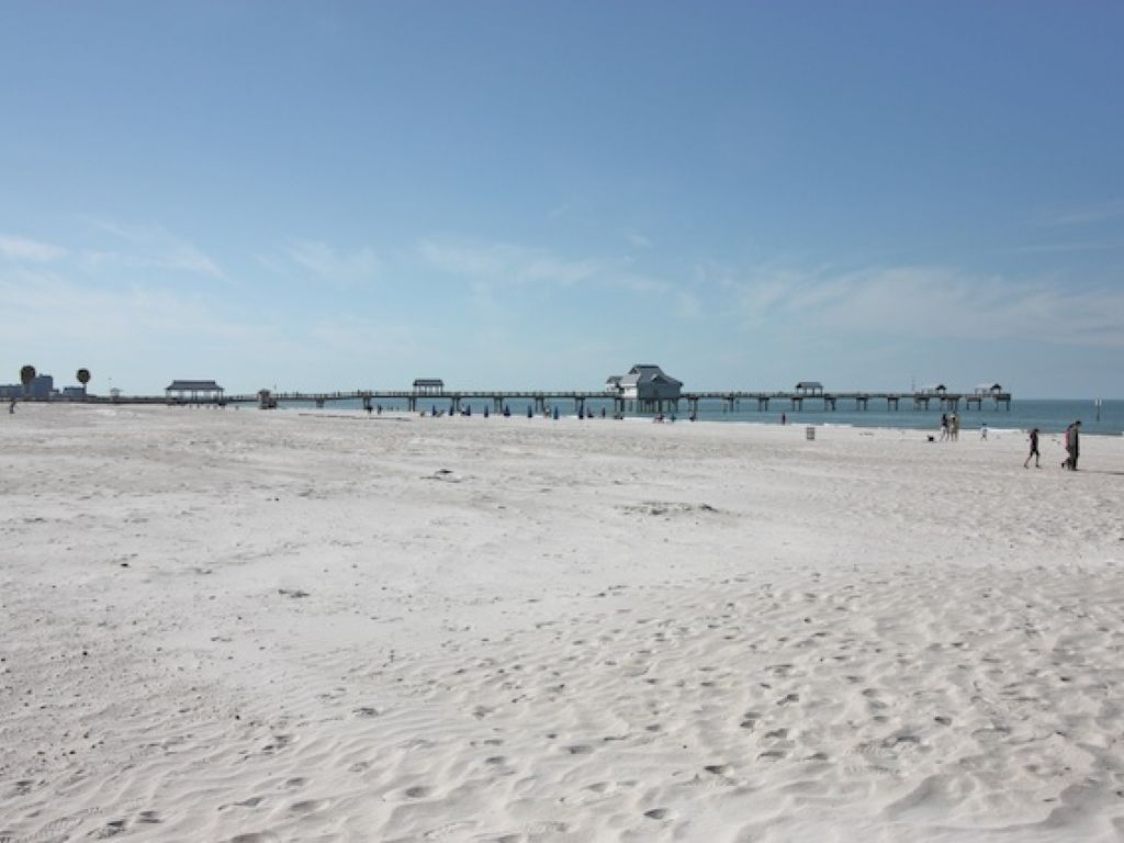 Pet Friendly  Bedroom Monthly Rentals In Clearwater Beach