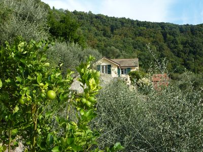 Photo for Rapallo: HOUSE SURROUNDED BY GREEN