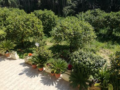 Photo for Villa immersed in a lemon grove, 500 meters from the baroque center of Noto