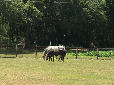 Photo for Charming farm near most of Central Florida's outdoor attractions.
