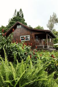 Photo for Stunning, Romantic Cottage  on Slope of Hualalai