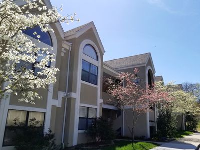 The condo in spring -  beautiful anytime of year.  We love the colorful dogwoods
