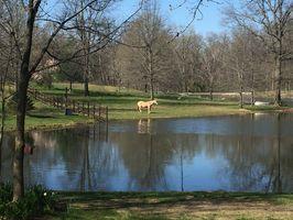 Photo for 2BR Apartment Vacation Rental in Pocahontas, Illinois
