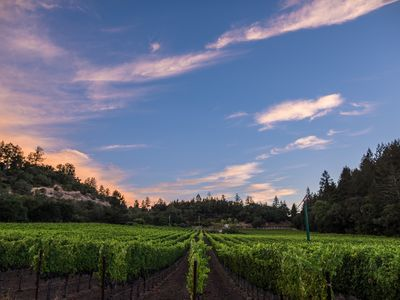 Photo for Calistoga Vineyard Home with 360 Degree Views