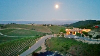 Photo for Wild Coyote Estate Winery/Vineyard 'House-Of-Zin'