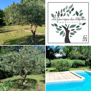 La Garrigue des Alpilles Since 1992