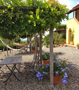 Photo for Serra Destri Manor, great view to sea and olivetrees, pool, dreamgarden