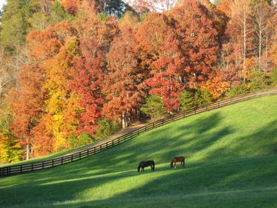 Grand pasture in the fall, one of 4 on premises. Visit our horses on your walk.