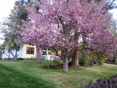 Photo for Historic home next to Drake Park in downtown Bend. Gorgeous setting