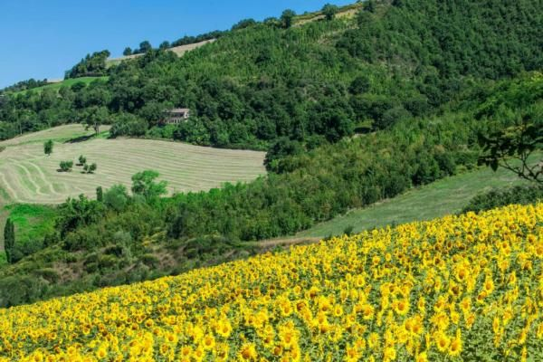 Holiday house Montefelcino for 13 persons with 7 bedrooms   Holiday house