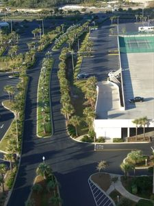 View of the Palm Tree Lined Driveway Leading to the Resort
