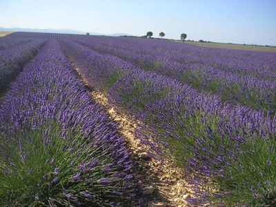 Photo for Lavender cottage in a quiet southern Ardèche.