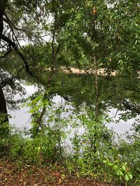 Photo for 2BR Cabin Vacation Rental in Mayo, Florida