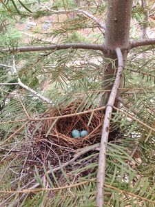 Bird's nest viewable from the front porch.