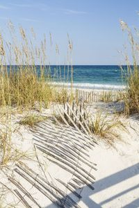 Walk to the Beach and Downtown Restaurants, Bars, and Shops!