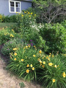 The cottage gardens are in bloom from late spring to early fall