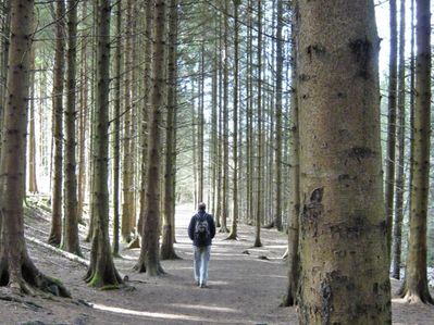 Walking in woodland in the Slieve Bloom Mountains