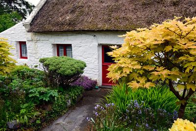 There is nothing better than a Cottage Garden. Enjoy plantings unique to Ireland