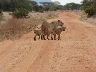 Thats how our safari to Tsavo East got started.