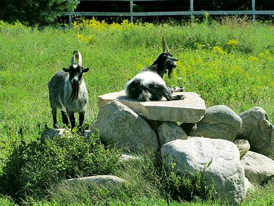The only noise you might hear is from the farm goat ...