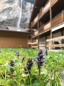 Photo for Holiday apartment Lauterbrunnen for 2 - 4 persons with 1 bedroom - Holiday apartment