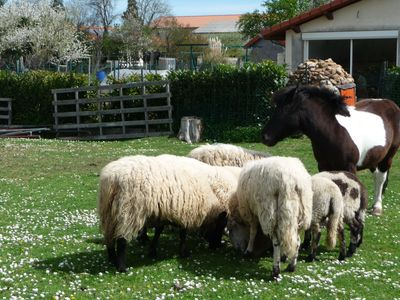 Photo for Studio surrounded by chickens, sheep, VOLCANOES in RIOM, 15 minutes walk from the center