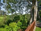 Enjoy the view of Balis wild jungle by our garden