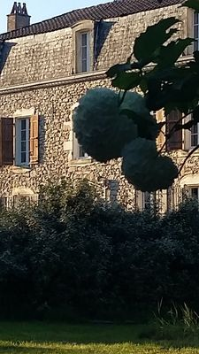 Photo for Manoir des Vites, exceptional country house set amongst the vineyards