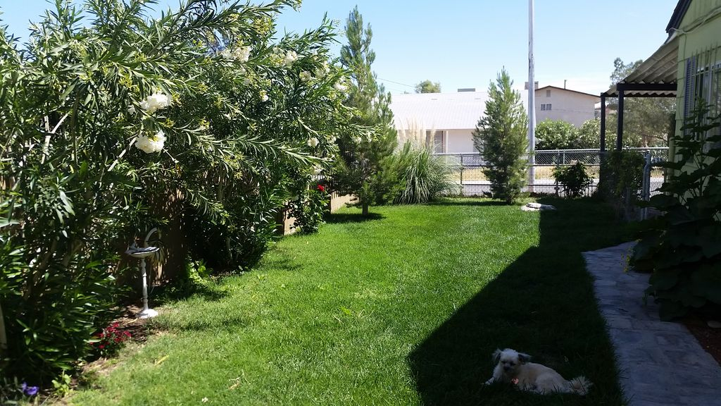 Downtown Las Vegas Pet freindly with fence... - HomeAway