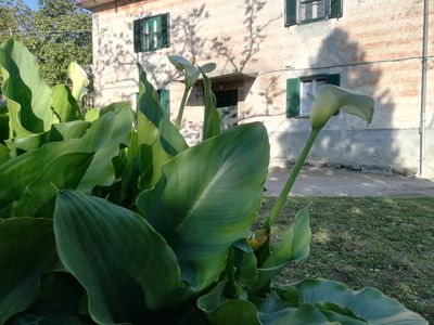 Photo for Farmhouse located a few meters from the Port of Marta, on Lake Bolsena