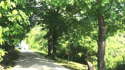 A beautiful short Tree Line driveway to our Industrial-Rustic Cottage