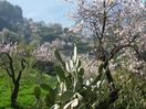 Spring Blossom view from Terrace